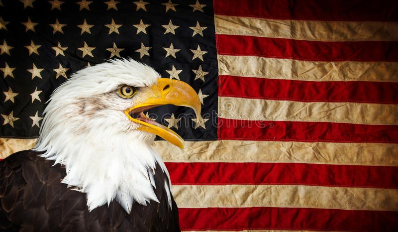 American Bald Eagle with Flag. royalty free stock images