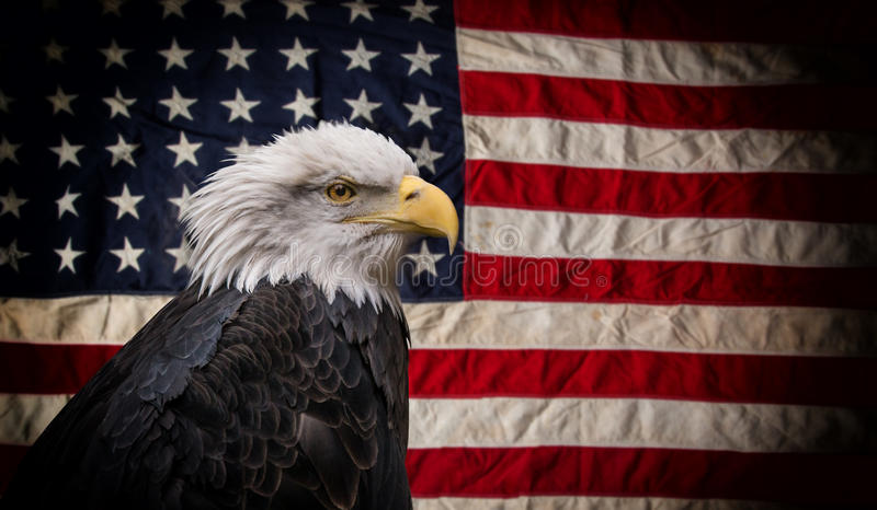 American Bald Eagle with Flag. stock photos