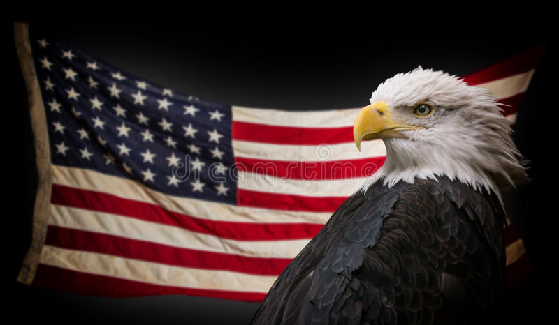 American Bald Eagle with Flag. stock photography