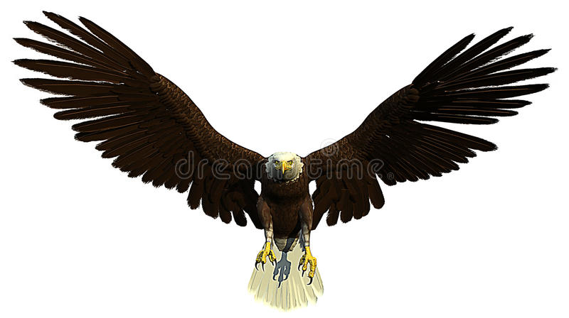 Download American Bald Eagle Flying And Hunting Stock Illustration - Illustration of bird, carnivore: 14282963