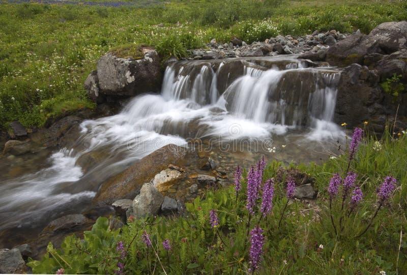 American Basin royalty free stock photography