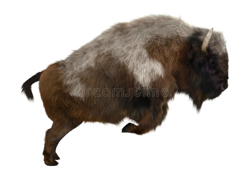 American Bison. 3D digital render of an American bison or American buffalo, a North American species of bison, isolated on white background stock photo