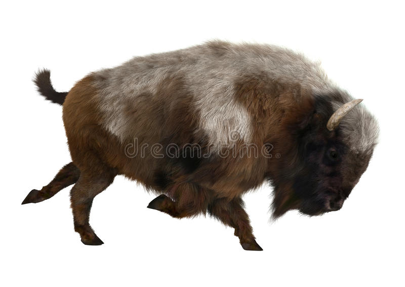 American Bison. 3D digital render of an American bison or American buffalo, a North American species of bison, isolated on white background stock image
