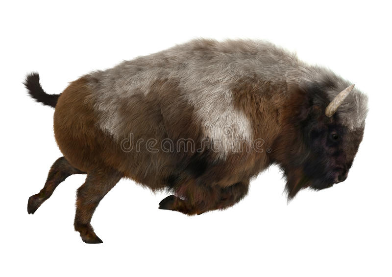 American Bison. 3D digital render of an American bison isolated on white background stock photo
