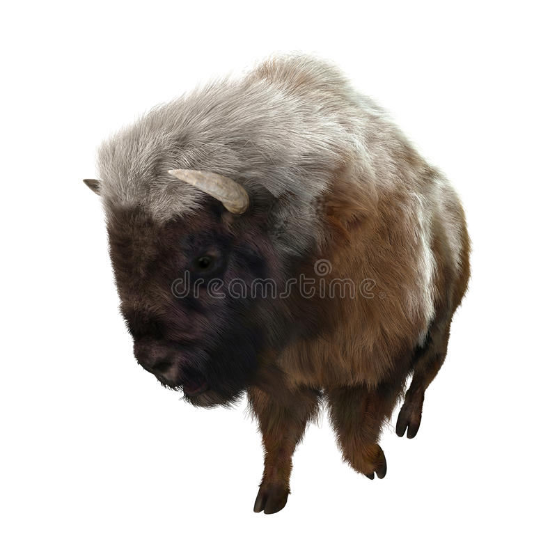 American Bison. 3D digital render of a running American bison isolated on white background royalty free stock photo