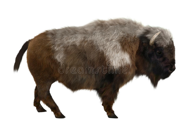 American Bison. 3D digital render of an American bison standing isolated on white background stock photo