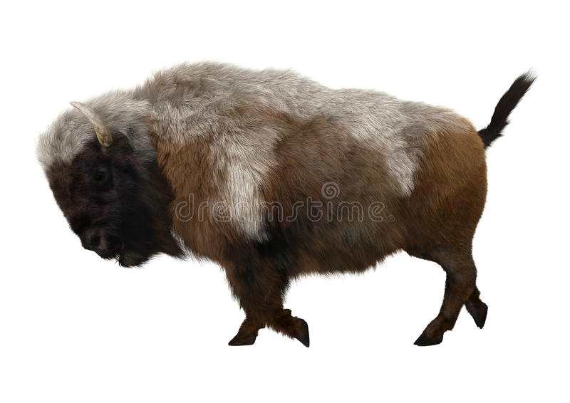 American Bison. 3D digital render of an American bison walking isolated on white background stock photo