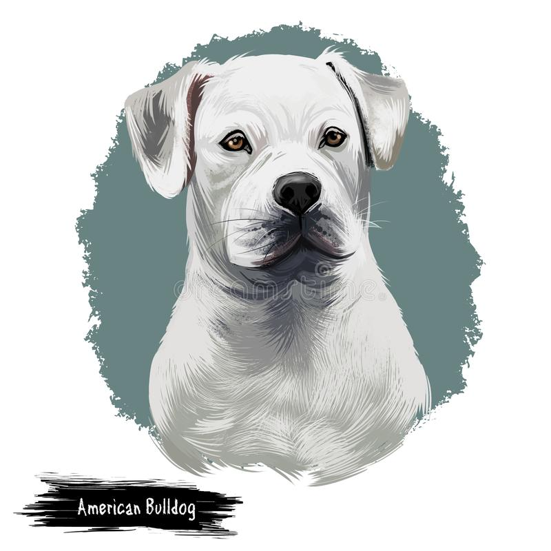 American Bulldog puppy digital art illustration isolated on white background. American Bulldog, Standard and Classic. Breed of utility dog. Stocky strong stock illustration