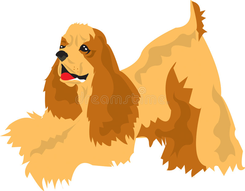 Download American Cocker Spaniel Royalty Free Stock Photo - Image: 3442885