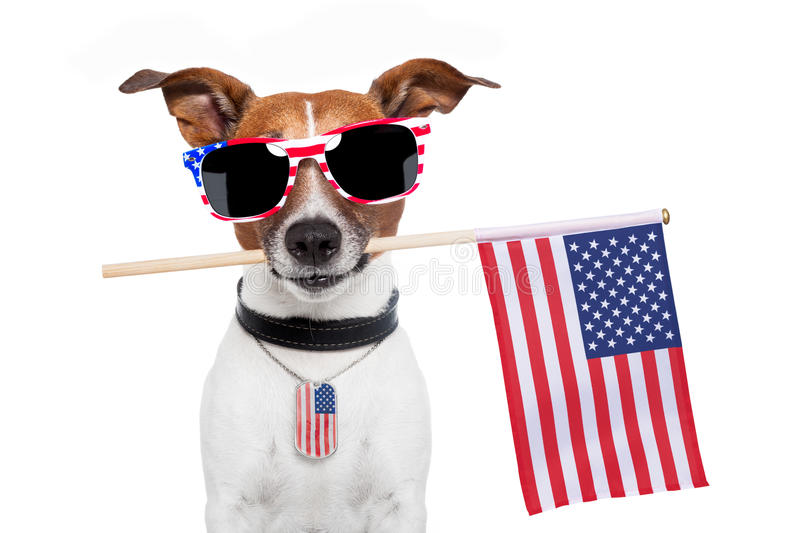 American dog. With USA flag and shades