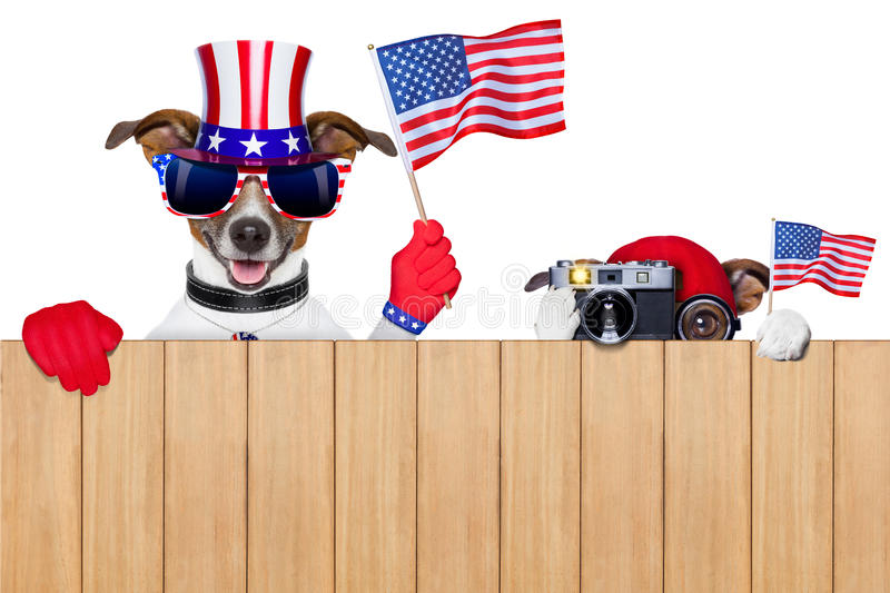 American dogs royalty free stock photos