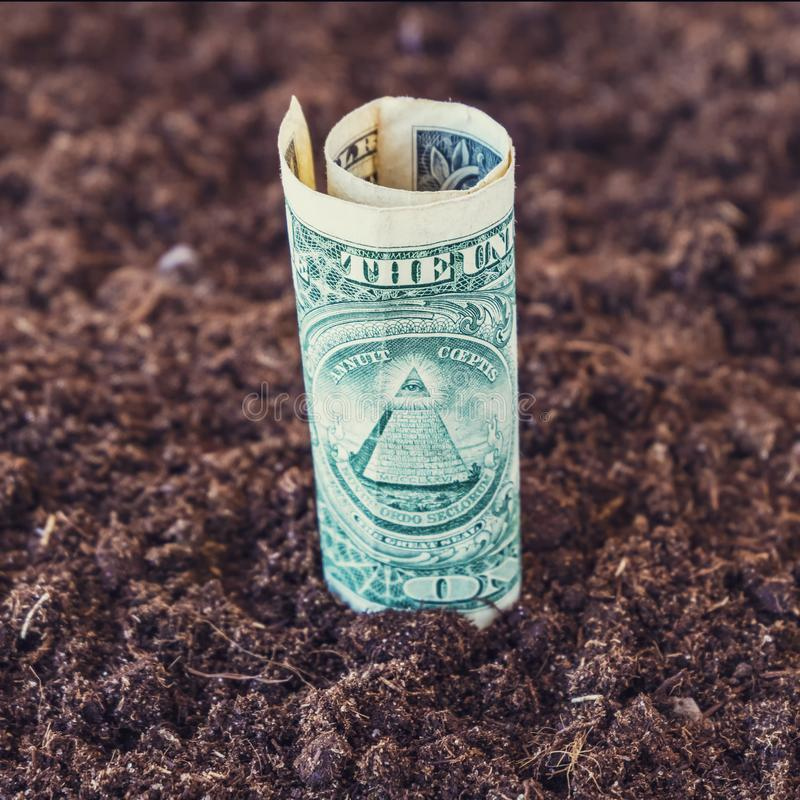 American dollar grow from the ground. Investment concept. royalty free stock photo