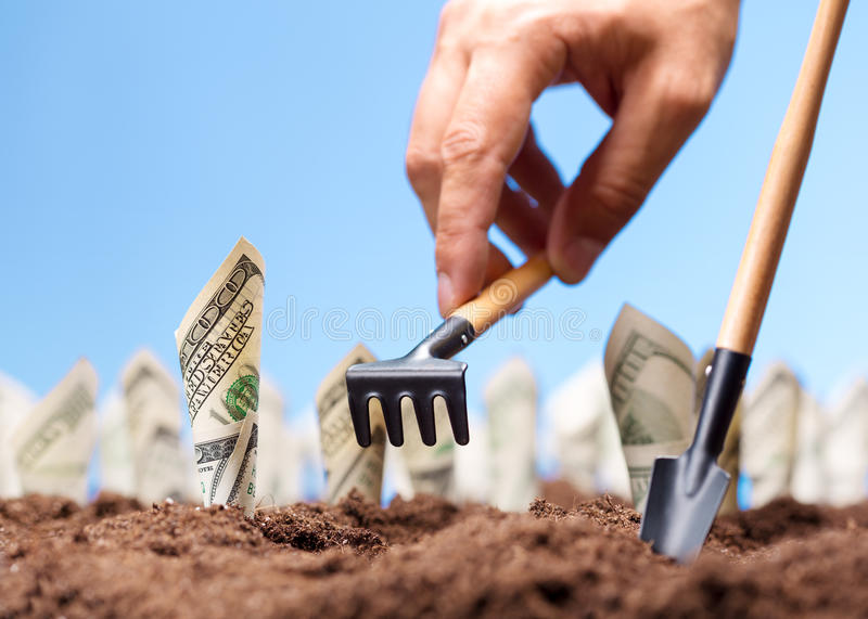 American dollars grow from the ground royalty free stock images