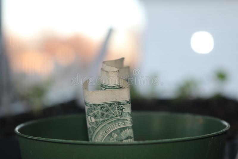 American dollars grow from the ground concept photo stock photos