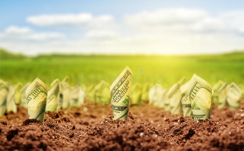 American dollars grow from the ground stock image