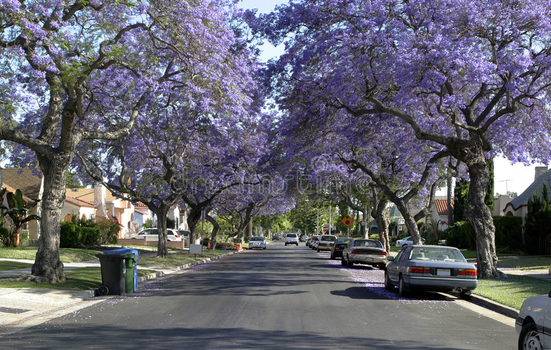 American dream street. A wonderful american street and exlusive properties from our dreams. Everyone would be happy to live here stock image