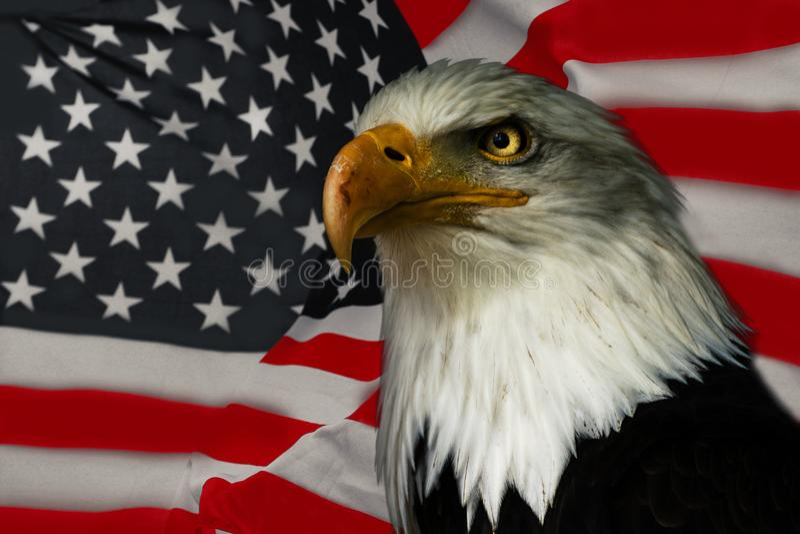 American Eagle National Symbol Stock Image Image Of Memorial