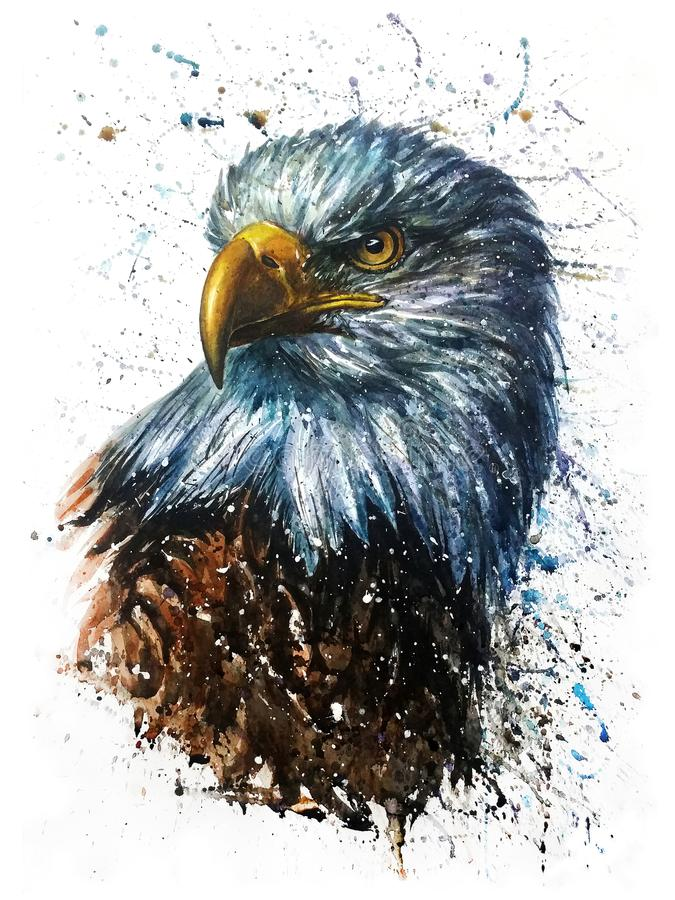 Free American Eagle Watercolor Predator Wildlife Painting Stock Images - 120841654