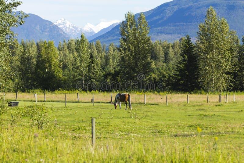 American Farm in Alaska stock photo