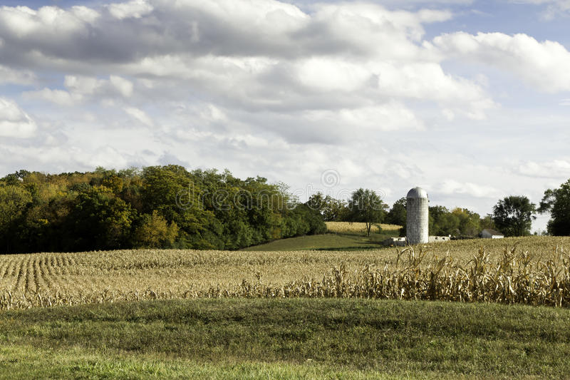 American farm in the field of corn royalty free stock photos