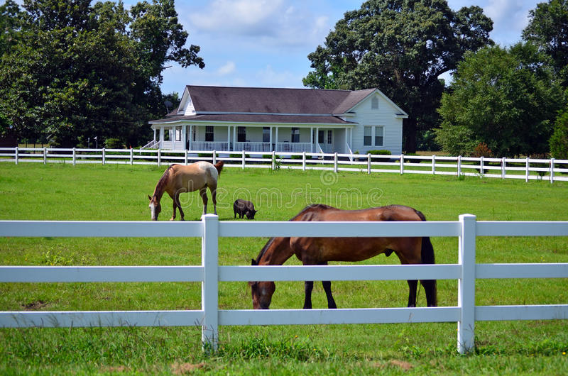 American Farm House Horse Pig Picket Fence stock image