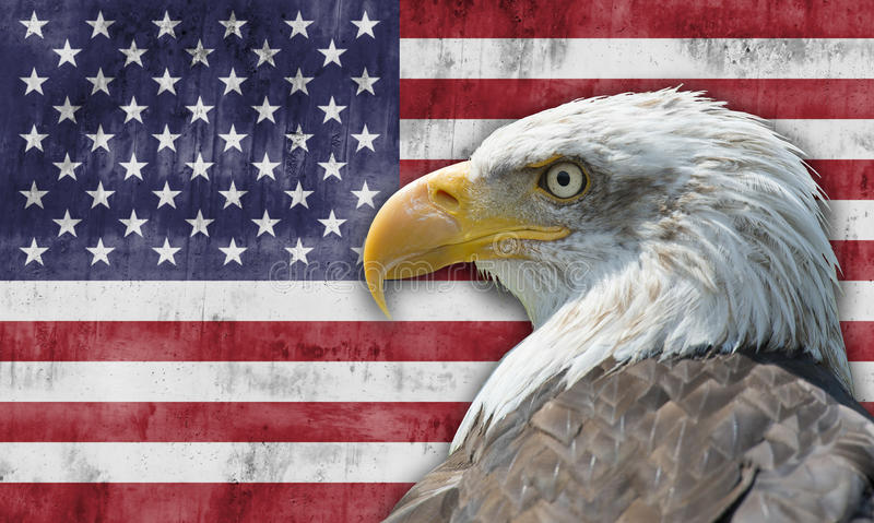 Download American Flag And Bald Eagle Stock Image - Image: 26698963