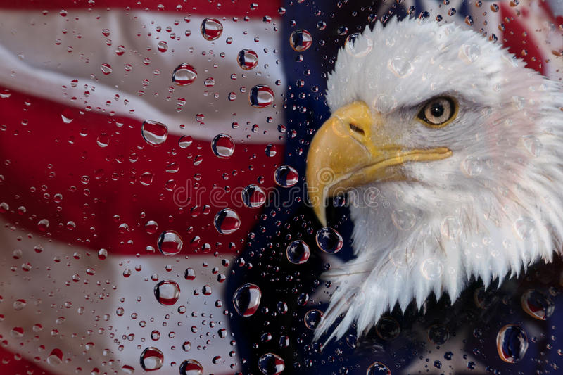 American flag and eagle. Bald eagle and American flag in water drops royalty free stock image