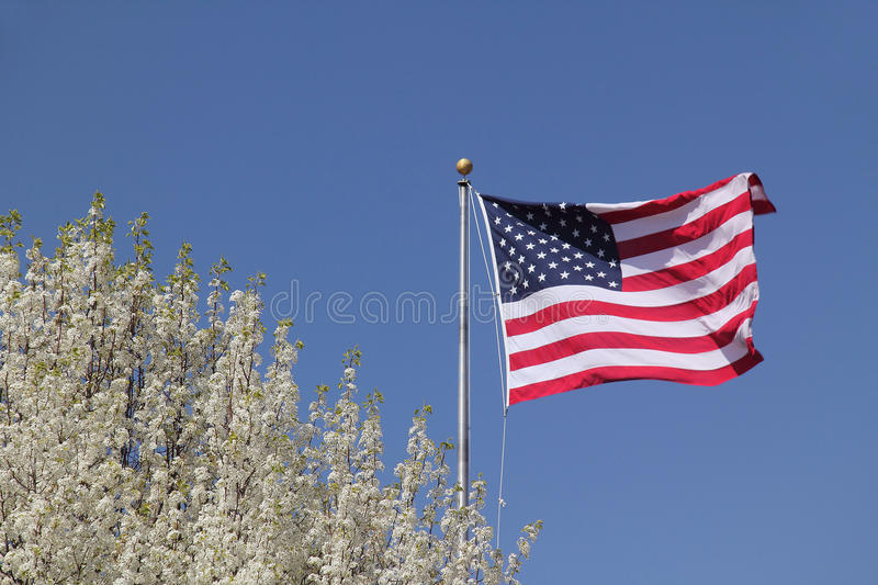 Download American Flag And Flowering Dogwood Stock Photo - Image: 23303482