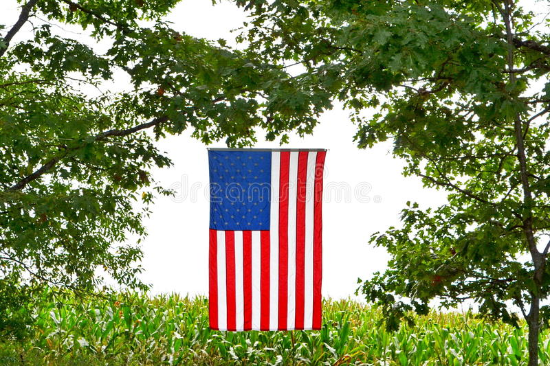 American Flag over corn field. American flag in the sun hanging between the trees in campground at the Wheatland Music Festival, Remus, Michigan royalty free stock photography