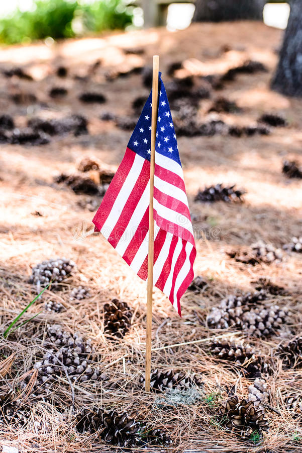 American Flag with pinecones. American Flags in ground with pine cones and pine needles stock photography