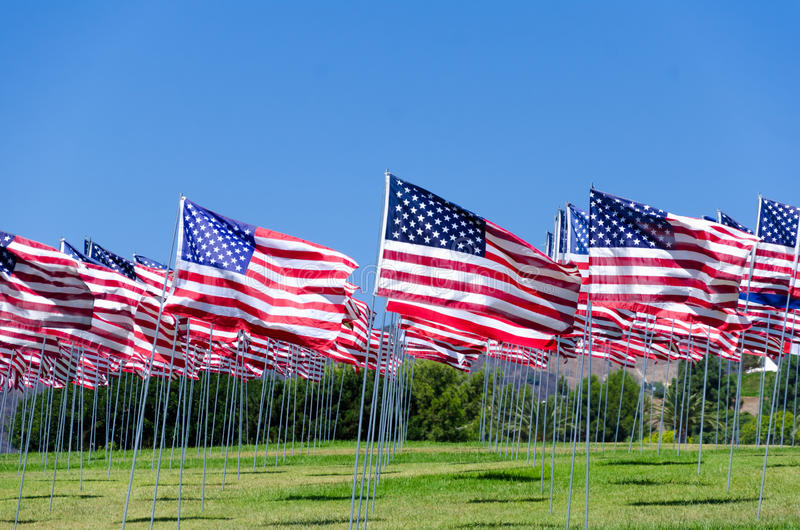 American flags on a field. American flags background on a green field royalty free stock photography