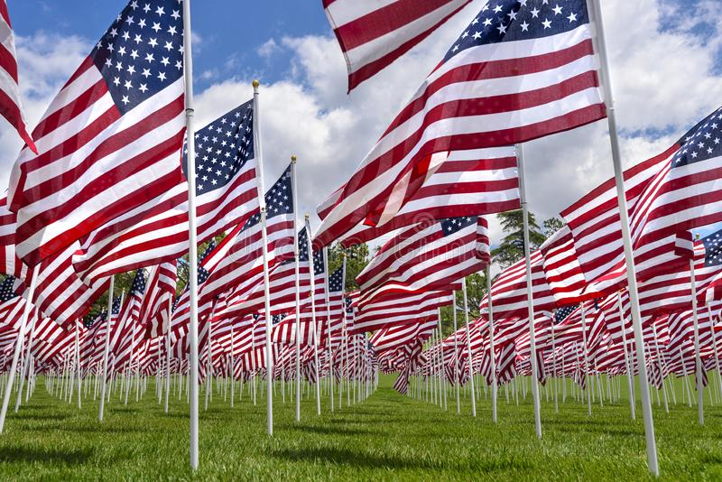 American flags on a green grass stock photos