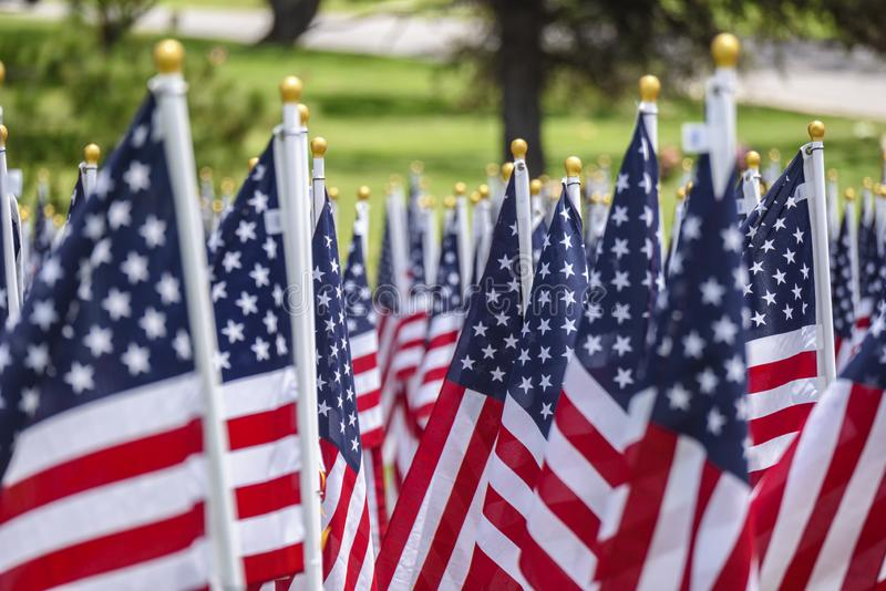 American flags on a green grass royalty free stock photo