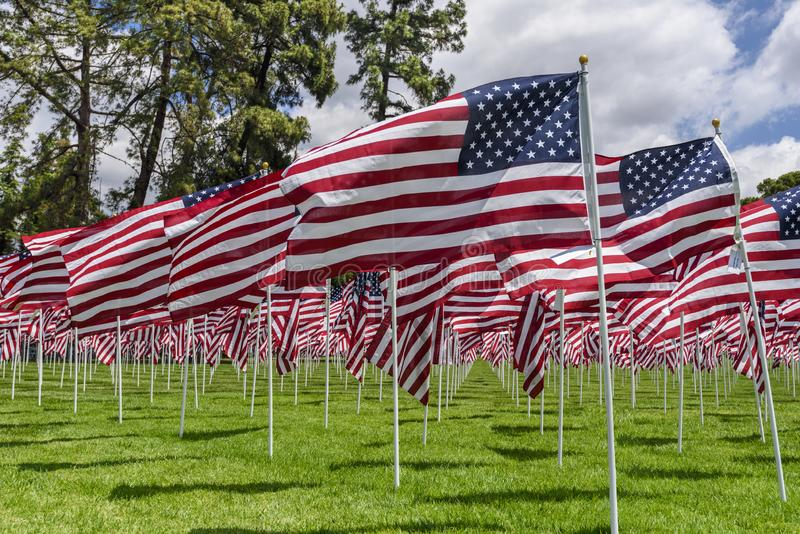 American flags on a green grass royalty free stock image