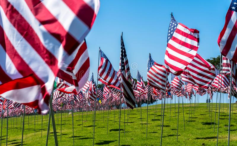 American Flags in the Wind. Captured in California on a national Holiday. Awesome Shot of a lot of Flags stock photography