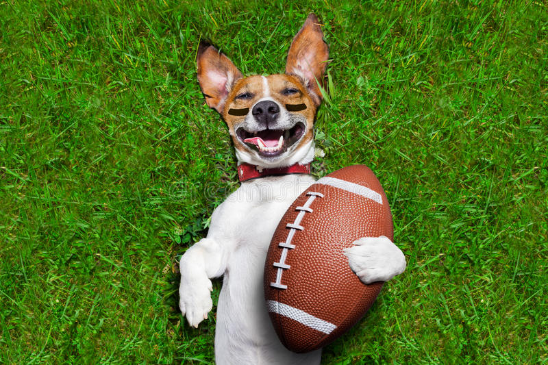 American football dog. Soccer dog holding a rugby ball and laughing out loud