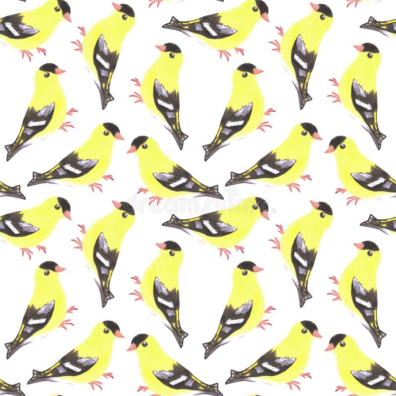 American goldfinch or Spinus tristis bird seamless watercolor birds painting background.  royalty free illustration