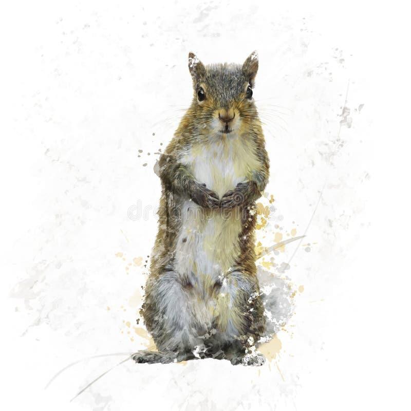 American Gray Squirrel watercolor vector illustration