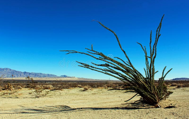 Ocotillo, Anza Borrego Desert State Park landscape stock photo