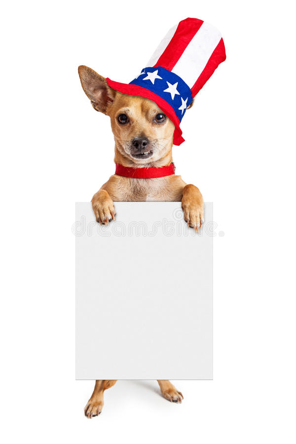 American Patriotic Chihuahua Dog Holding Sign. A cute little Chihuahua crossbreed dog wearing Patriotic red, white and blue hat while holding a blank white sign royalty free stock photo