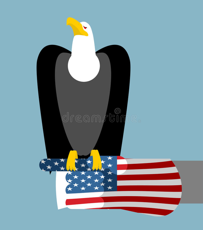 American patriotic eagle hunting. Bald eagle sitting on glove royalty free illustration