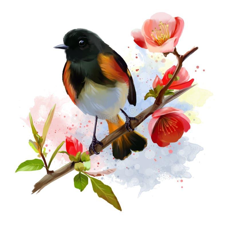 American Redstart bird watercolor painting vector illustration