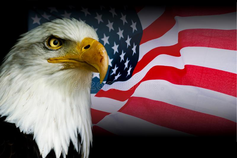 American symbol - USA flag with eagle. With black background stock image