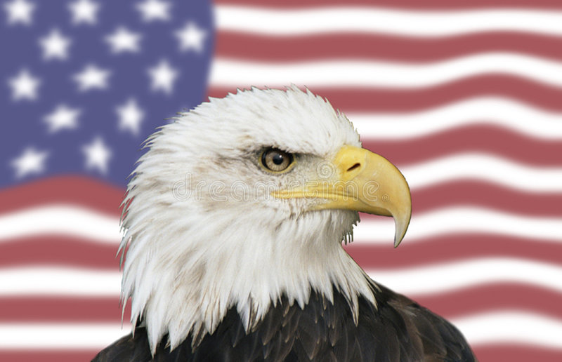 American symbols. Bald eagle with the stars nad strips as a backdrop