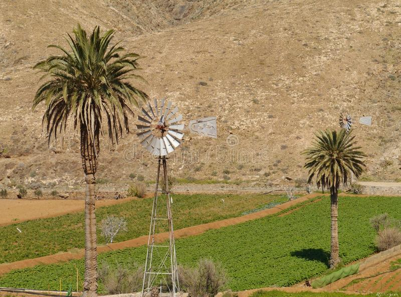 An American wind mill in the Buen Paso valley. Agriculture in the Buen Paso valley on Fuerteventura. This Canary island belongs to Spain stock photography