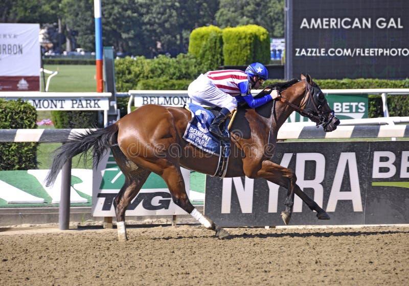 Americano Gal Racehorse fotografía de archivo