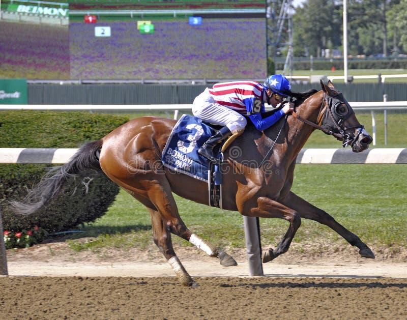 Amerikaans Gal Racehorse stock foto