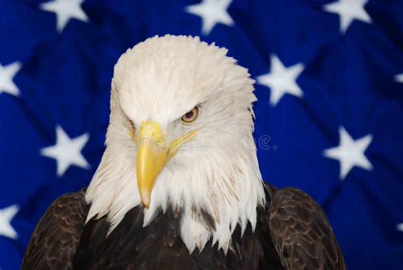 Amerikaans Kaal Eagle royalty-vrije stock foto's