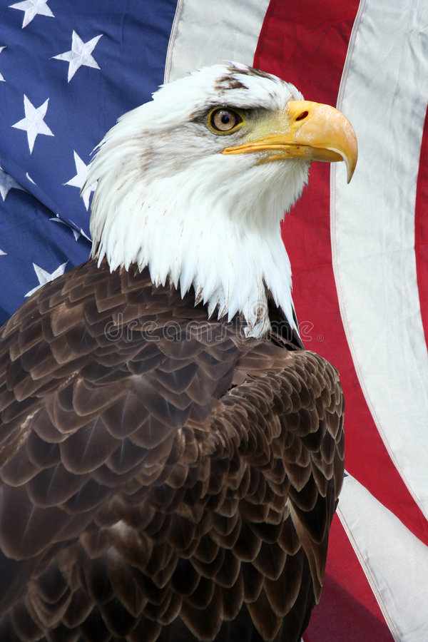 Amerikaanse Adelaar royalty-vrije stock foto's