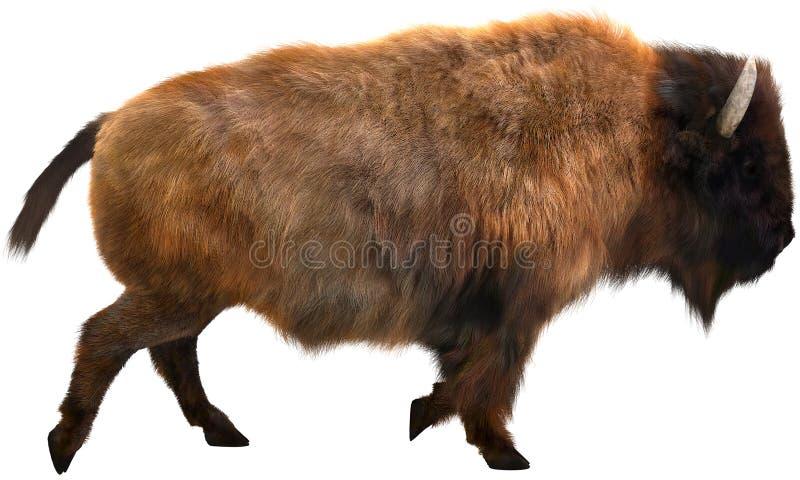 Amerikaanse Bizon, Buffels, Geïsoleerde Illustratie stock afbeelding